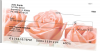 Spring Rose Bouquet | STFLO-41